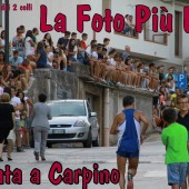 carpino runners